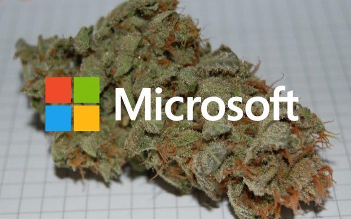 Microsoft investit dans la culture de cannabis et ce n'est pas une blague