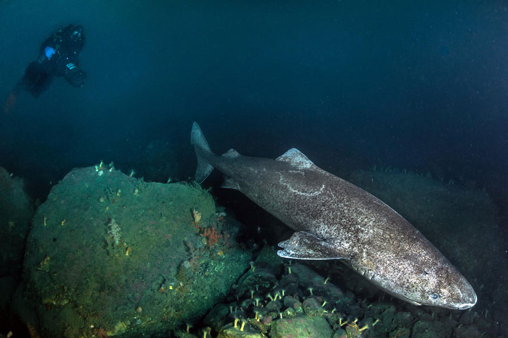 requin 400 ans