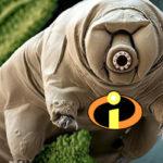 Bientôt tous des super-héros grâce au génome du tardigrade, petit animal indestructible