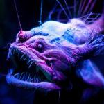 creatures bizarre fond des oceans