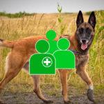 Cancer du sein : voici comment on entraîne des chiens à les détecter