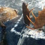 Ces deux élans figés dans la glace en train de se battre enflamment la toile