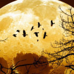 Super Lune : ne ratez pas celle du 14 novembre, la plus grosse du XXIe siècle !