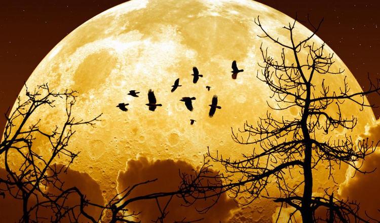 Breves et notes sur ce qu'il ne faut pas manquer  Super-lune-novembre-ratez-pas-plus-grosse-xxie-siecle