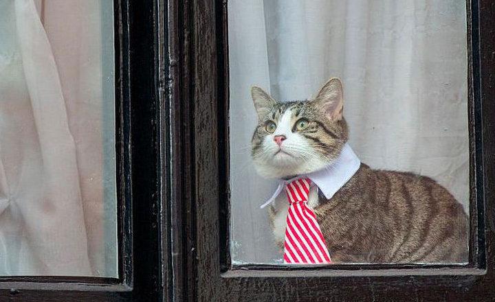Toujours privé d'internet, Julian Assange s'ennuie et déguise son chat
