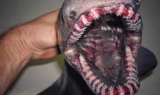 Ces poissons et crustacés venus du fond des océans vont vous faire faire des cauchemars