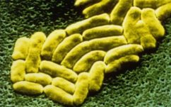 Antibiotiques : une bactérie banale résistante fait un mort, l'OMS s'inquiète