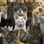 En Australie, les chats errants déciment les espèces en voie de disparition