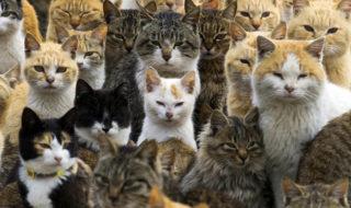 australie chats errants deciment especes voie disparition