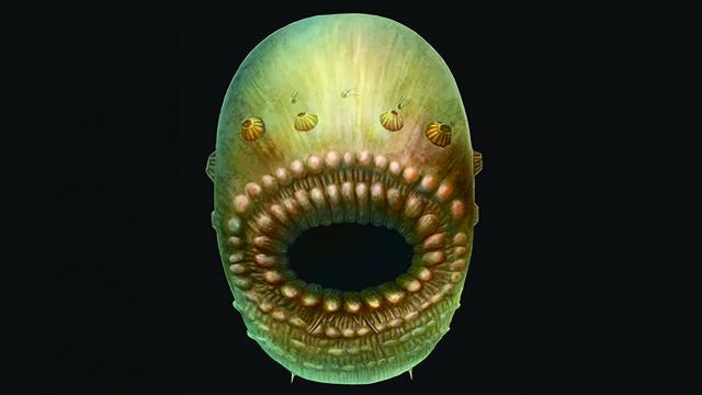 Le plus vieil ancêtre de l'Homme était sans anus mais avait une bouche énorme !