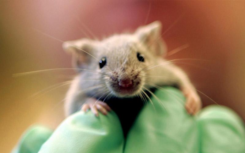 scientifiques regresser symptomes alzheimer souris