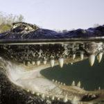 thailande selfie croquer jambe crocodile