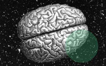 Intelligence : on en sait plus sur les gènes de l'ADN qui expliquent le QI
