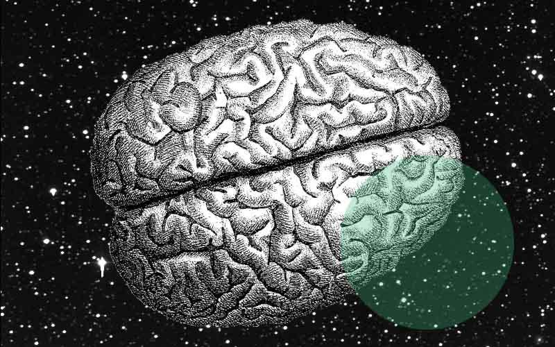intelligence genes adn qi