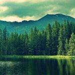 rechauffement climatique plantes