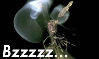 moustiques pistolet laser