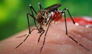 Google va lâcher 20 millions de moustiques OGM dans la nature !