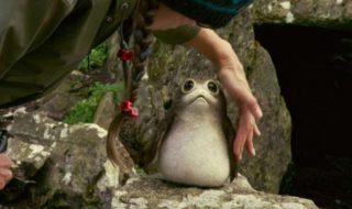 Star Wars 8 Les Derniers Jedi : que sont les Porgs, ces créatures encore plus mignonnes que les Ewoks ?