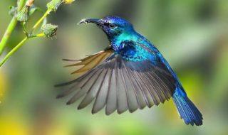 vol colibri video