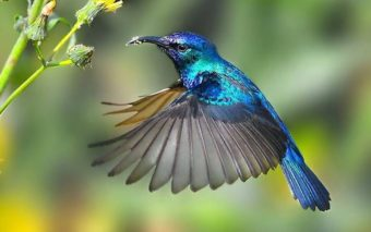 Vidéo : admirez le vol du colibri au ralenti