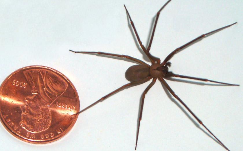 Une araignée pique 4 nouvelles personnes et leur provoque des nécroses horribles