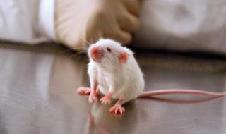 Des nano-robots tueurs de bactéries parviennent à soigner des souris