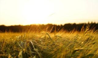Glyphosate : quels sont les dangers pour la santé et peut-on s'en passer ?