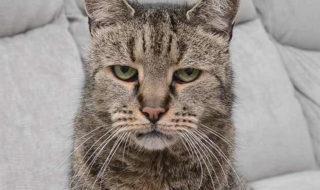 Le chat le plus vieux au monde est mort à l'âge de 32 ans : quel était le secret de ses maîtres ?
