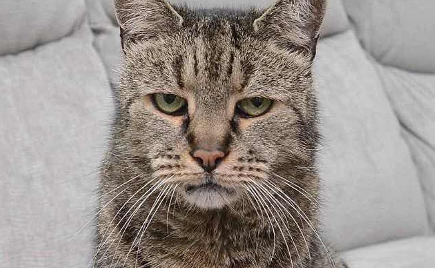 chat plus vieux monde