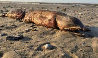Ouragans : l'étrange monstre marin découvert après le passage d'Harvey a été identifié !