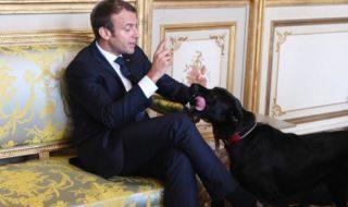 Nemo Chien Macron