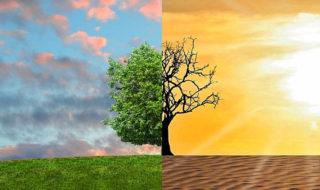 Réchauffement climatique : comment éviter une 6e extinction massive ?