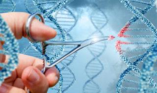 Génétique : des scientifiques ont réussi à reprogrammer l'ADN d'un être humain vivant !