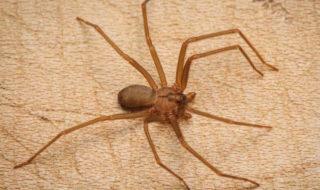 Pourquoi les araignées rentrent dans la maison ?