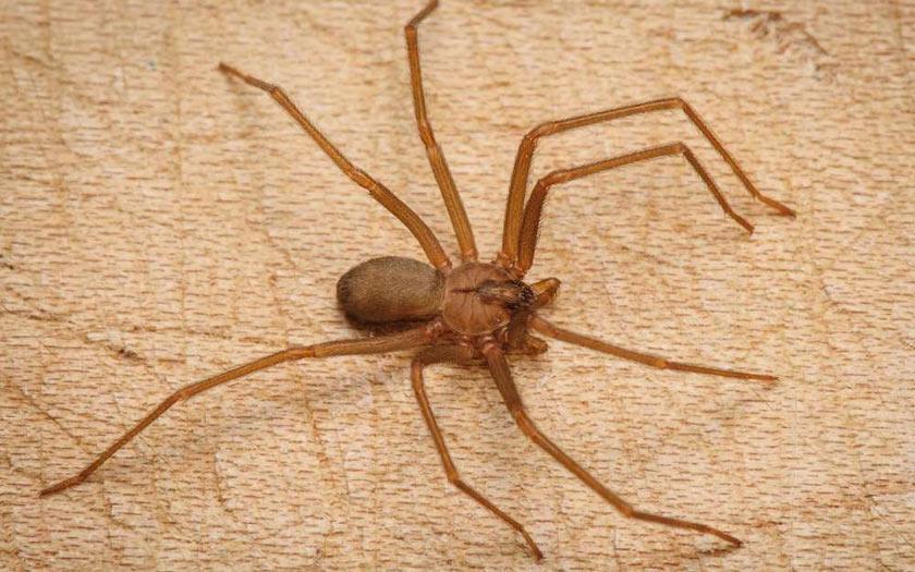Pourquoi les araign es rentrent dans la maison for Araigne sauteuse maison