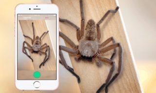 Critterpedia : cette appli permet d'identifier les araignées et les serpents dangereux