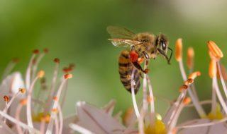 Les smartphones menacent l'existence de certaines familles d'insectes