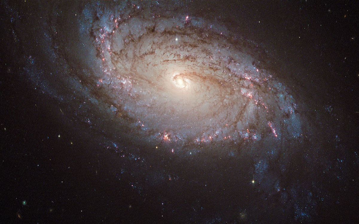 NASA Supernova SN 2004dg