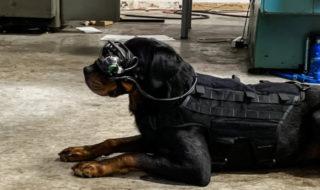 Réalité augmentée : des lunettes AR pour commander les chiens de l'armée US à distance