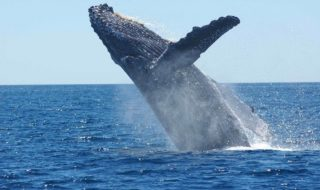 Californie : deux kayakistes quasiment avalées par une baleine (vidéo)