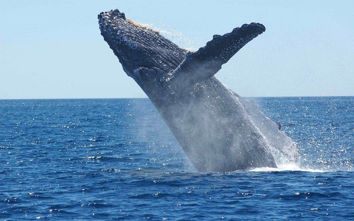 deux kayakistes quasiment avalées par une baleine