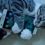 Cette app traduit les miaulements de votre chat
