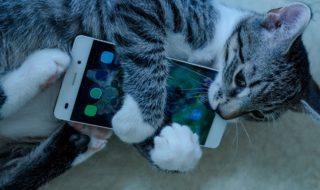 Cette application traduit les miaulements de votre chat
