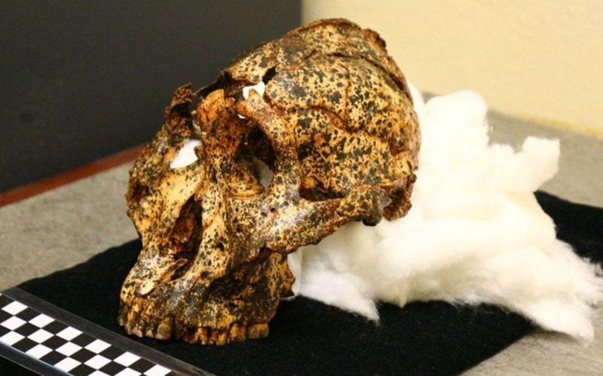 Découverte d'un crâne de deux millions d'années appartenant à un cousin de l'Homme