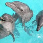 Fin des spectacles de dauphins au Parc Astérix