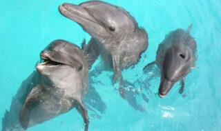 Parc Astérix : clap de fin pour les spectacles de dauphins