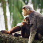 Des singes à Singapour