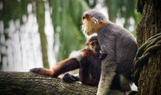 Croisement homme-singe : des scientifiques ont créé les premiers bébés chimères
